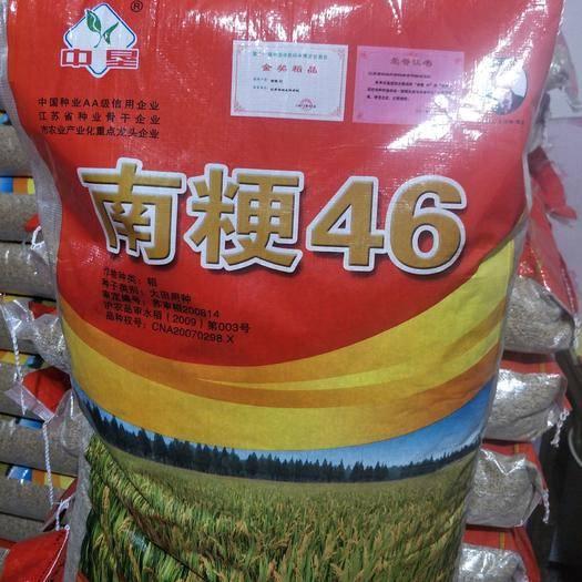 宿迁沭阳县 水稻种子南粳46高产粳米品种