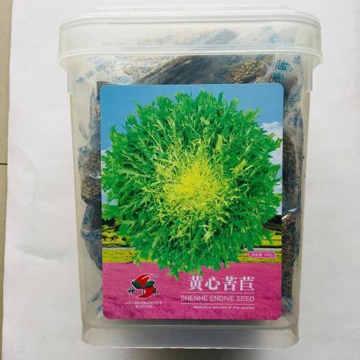 西充县 荷兰细叶苦苣种子新种子包邮