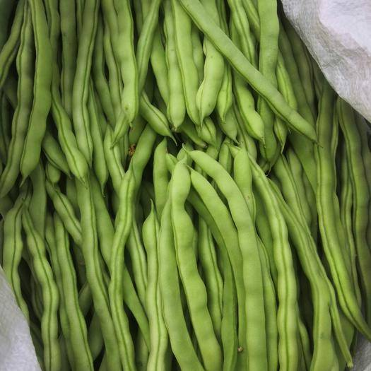 紅河紅河縣 云南四季豆,金豆3斤5斤10斤可批發量大優惠