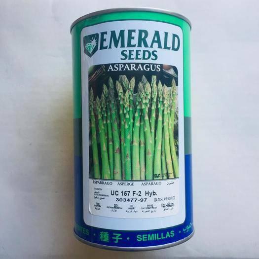 成都 芦笋种子四季播多年生进口新种子包邮