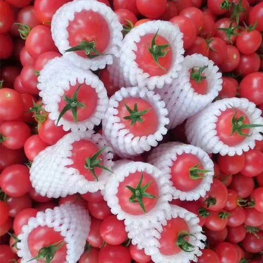 攀枝花仁和区 正宗圣女果小西红柿1斤/3斤 小西红柿小番茄新鲜