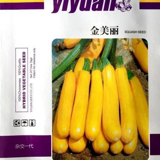 成都 香蕉西葫芦种子高产早青西葫芦新种子包邮