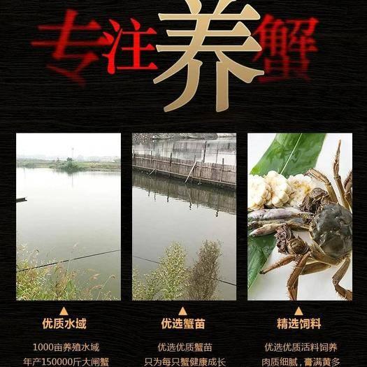 洪湖市 洪湖大闸蟹 大量货源 河蟹海鲜水产新鲜螃蟹湖蟹 价格优惠
