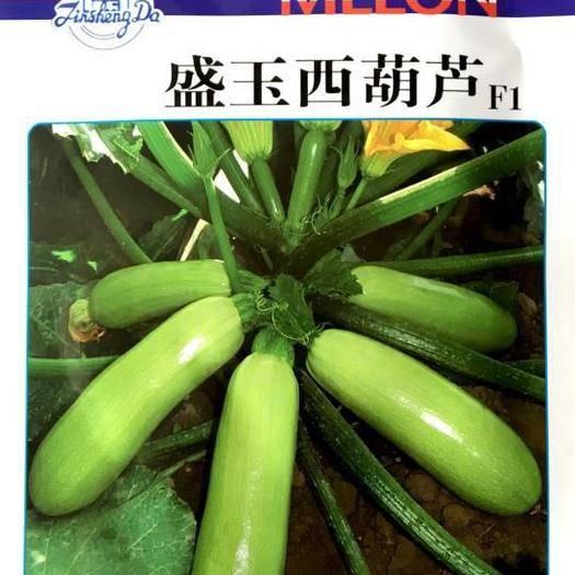 郑州 各种西葫芦种子散称袋装包邮大量现货供应