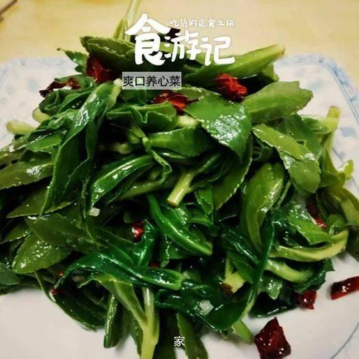 宿迁沭阳县 高钙菜种子养心菜种子救心菜种了包邮