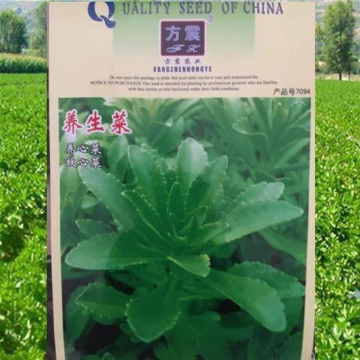 成都锦江区 高钙菜种子养心菜种子救心菜种子包邮