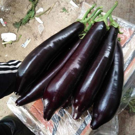 兰陵县 精品765长茄,条形正无损伤干疤
