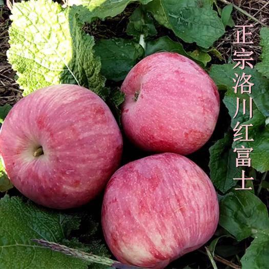 洛川縣洛川蘋果 正宗陜西洛川紅富士75mm至90mm 脆甜可口48小時發貨