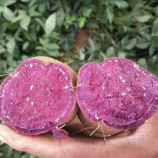 漳浦縣 蔬菜紫薯+荷蘭豆+西蘭花