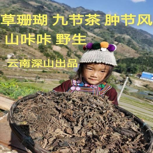 金平苗族瑤族傣族自治縣 草珊瑚腫節風九節風九節茶