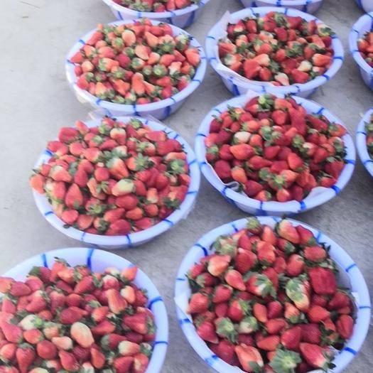 德昌縣 德昌露天草莓奶油草莓