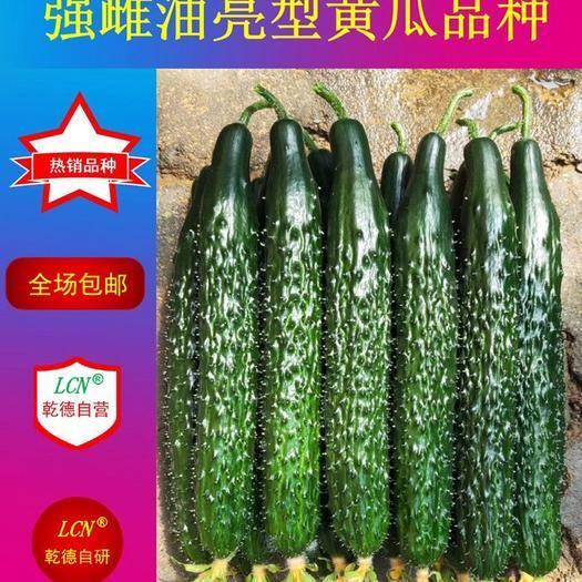 寿光市 乾德六加七强雌油亮高产黄瓜品种 春秋茬 热销产品