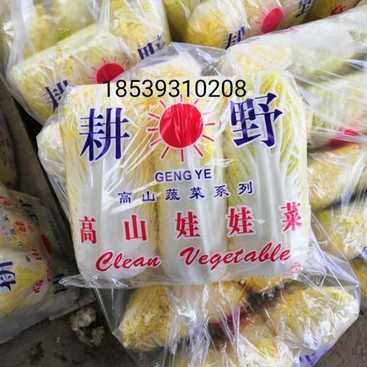 濮阳清丰县 玲珑黄娃娃菜 黄心、硬货、保证质量、欢迎全国老板订购