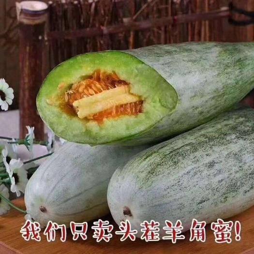 濰坊寒亭區羊角蜜甜瓜 羊角蜜  博洋91大量上市