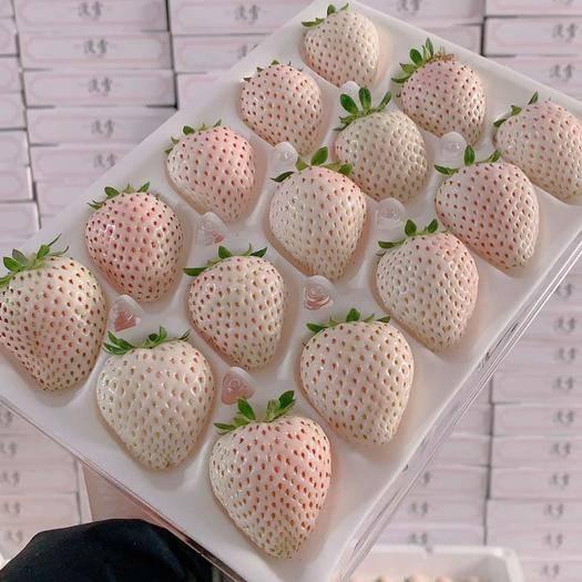 棲霞市 家庭裝3盒1000g????網紅淡雪白草莓????順豐空運