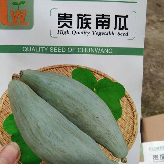 江永县 优质贵族南瓜种子