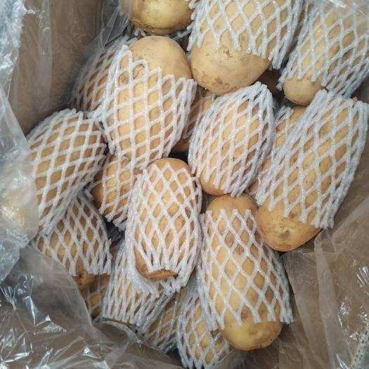 沂源縣 荷蘭十五土豆產地供應 誠信經營 物流全國發貨