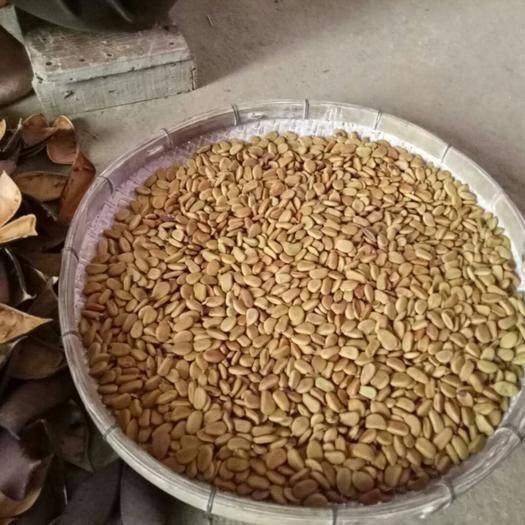 百色 供应优质苏木种子