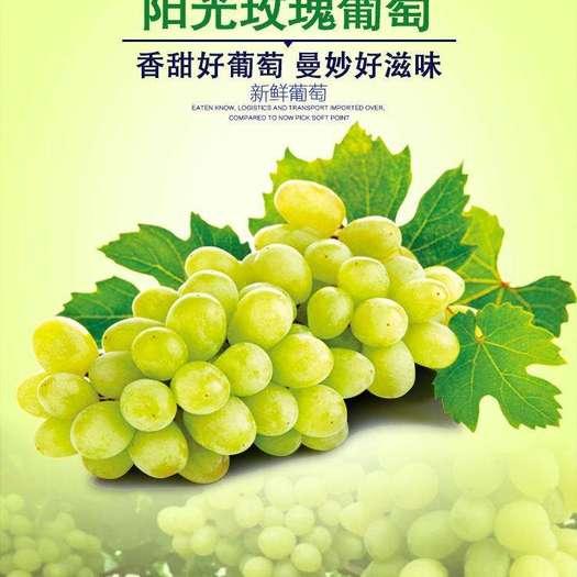 大荔县 大荔县和蒲城县阳光玫瑰10月中。中旬大量上市火热预售中