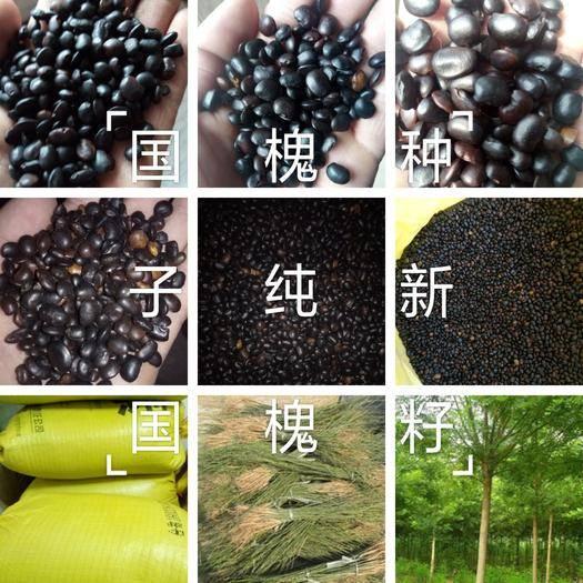 菏泽牡丹区 【爆款推荐】精品国槐种子,纯新种子,人工挑拣,发芽率%98