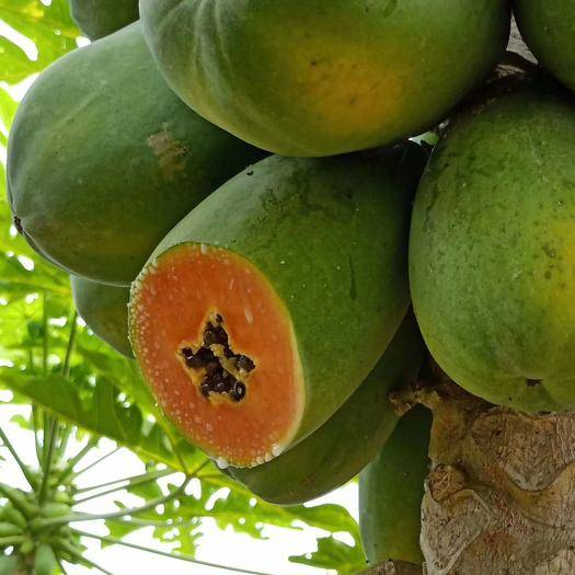 南寧武鳴區 紅心奶油木瓜 8斤裝 2月12號發貨 果大肉厚 甘甜脆口