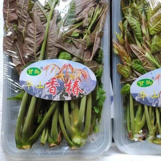 渭南華陰市紅油香椿芽 華山紅油香椿