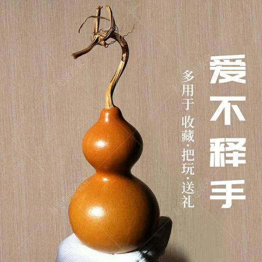 寿光市 葫芦种子特小手捻葫芦农家菜园四季种植观赏花卉高产宝葫芦菜籽