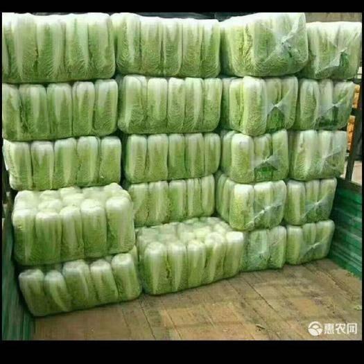 滕州市 北京新三号 净菜 产地直供 货源充足 袋装