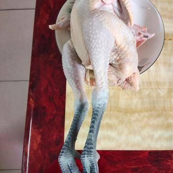 麻鸡  鸡,清远鸡,土鸡,农家鸡。