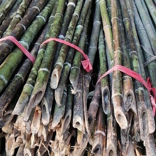 衡阳耒阳市莱架竹 新鲜的菜架竹上市了,各个规格都有啊!