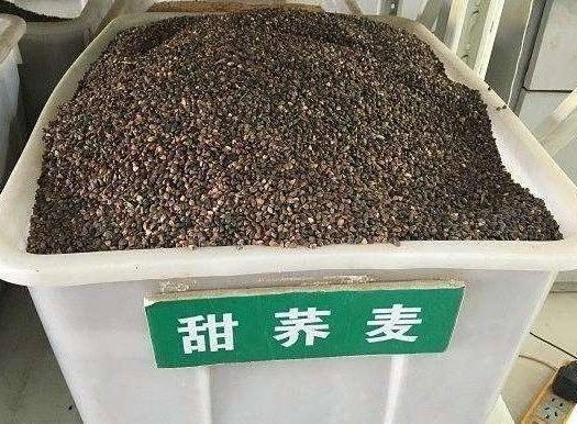 宿迁沭阳县 荞麦种子