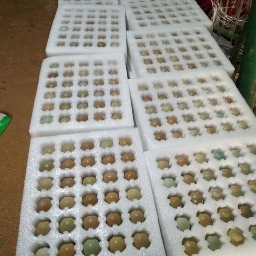 商丘虞城縣 60枚一箱,七彩山雞蛋,農家散養