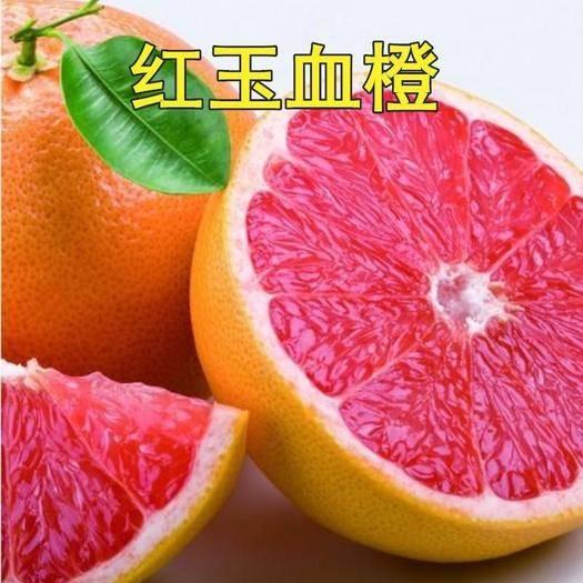 临沂平邑县 正宗红玉血橙苗基地直销 现挖现发 当年结果 可签合同