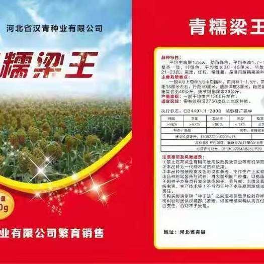 滄州青縣紅高粱種 青糯糧王