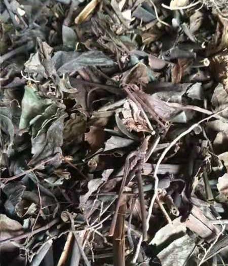 温州泰顺县草珊瑚种子 九节茶,草珊瑚干货