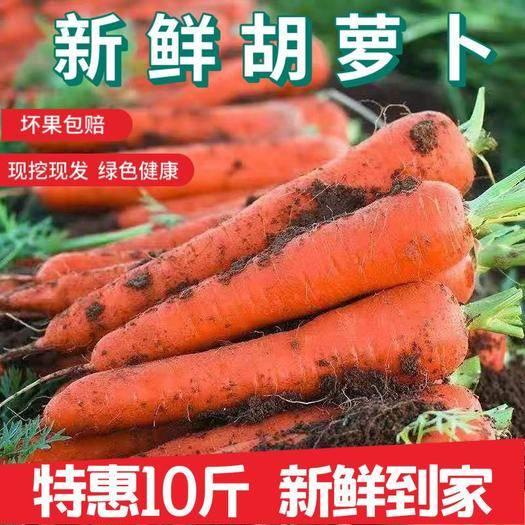 开封兰考县 现挖胡萝卜10斤仅14.9元,一件代发包邮!