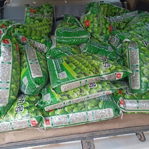 寶豐縣 豌豆