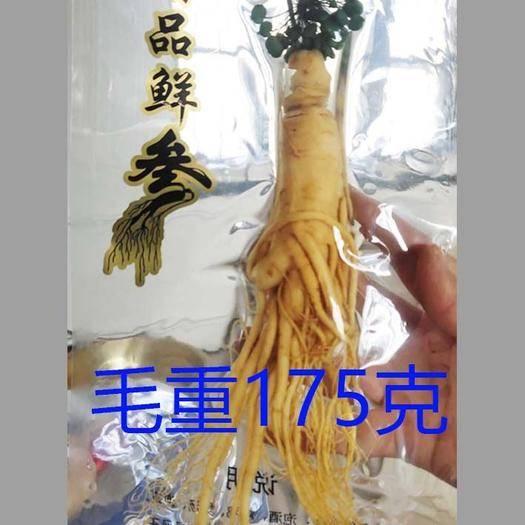 抚松县长白山人参 保鲜参毛重175克净重65克左右 工厂直销 全年供货