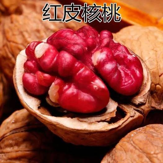 平邑县 红皮核桃苗盆栽地栽南北方种植现挖现发基地直销当年结果苗