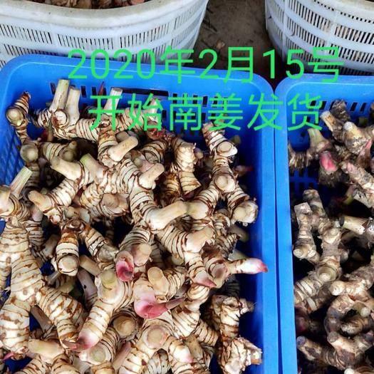 惠州惠阳区 现挖泰国白皮南姜