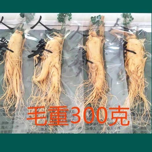 抚松县长白山人参 保鲜参毛重300克净重140克左右 工厂直销 全年供货