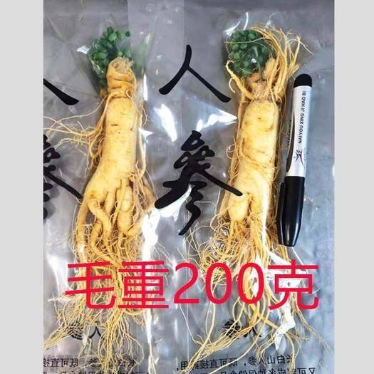 抚松县长白山人参 保鲜参毛重200克净重90克左右 工厂直销 全年供货