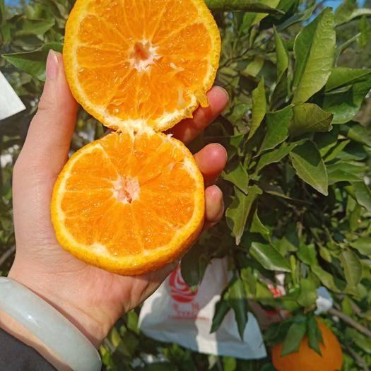 蒲江县耙耙柑 四川最值得期待的不知火丑柑,超级甜蜜,很脆哦!值得购买