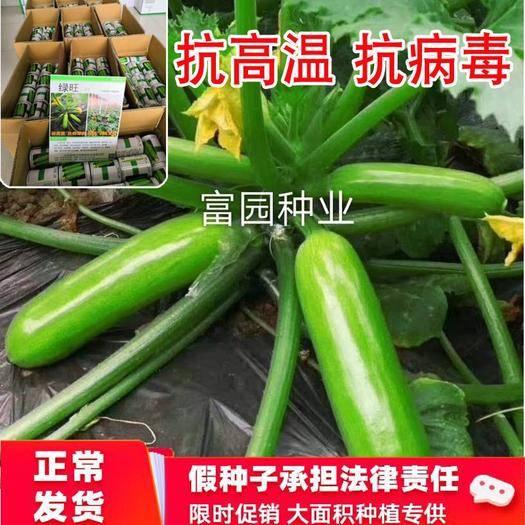 寿光市 耐热高抗病毒高产油亮西葫芦种子角瓜籽