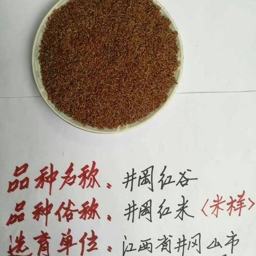 吉安井冈山市红米水稻种子 常规种 ≥85%