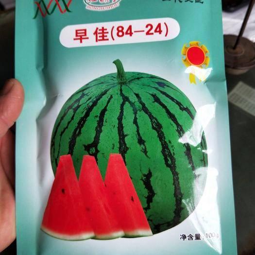 商丘夏邑县 宁波微盟红酥手西瓜种子