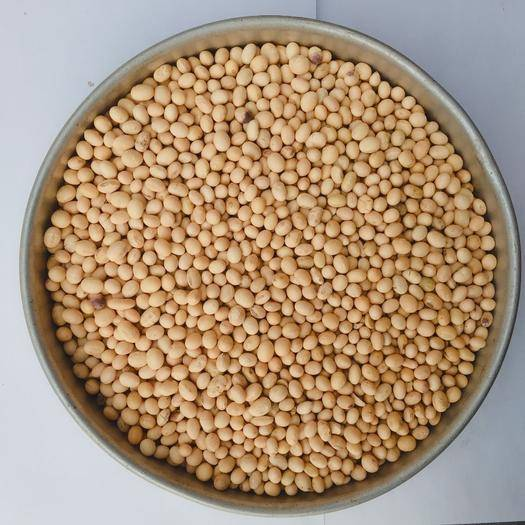安庆望江县有机黄豆 安徽优质非转基因黄豆