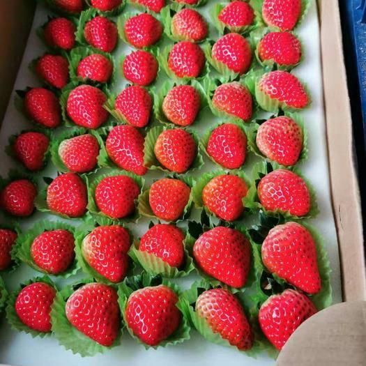 南京 紅顏奶油香草莓,順豐包郵  現摘現貨