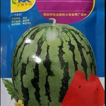 申抗988(抗重茬美都类型)西瓜种子
