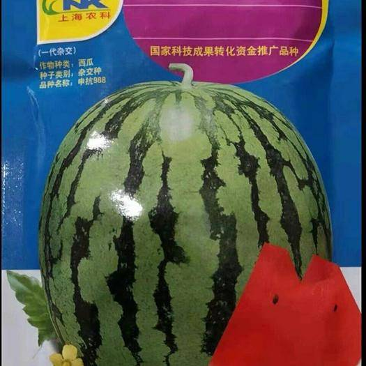 商丘睢阳区 申抗988(抗重茬美都类型)西瓜种子